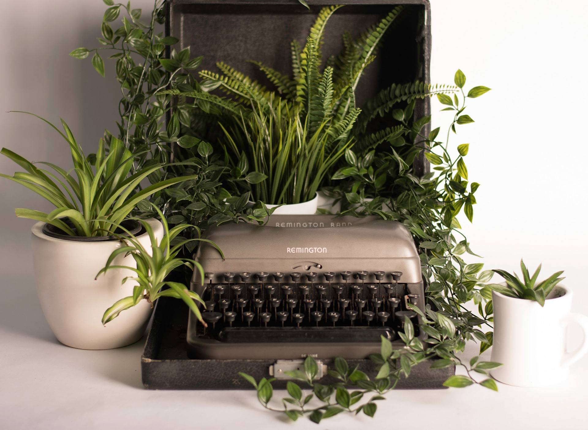 Typewriter with plants