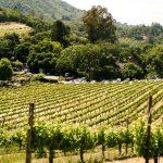 Photo of a Vineyard in Regional Australia